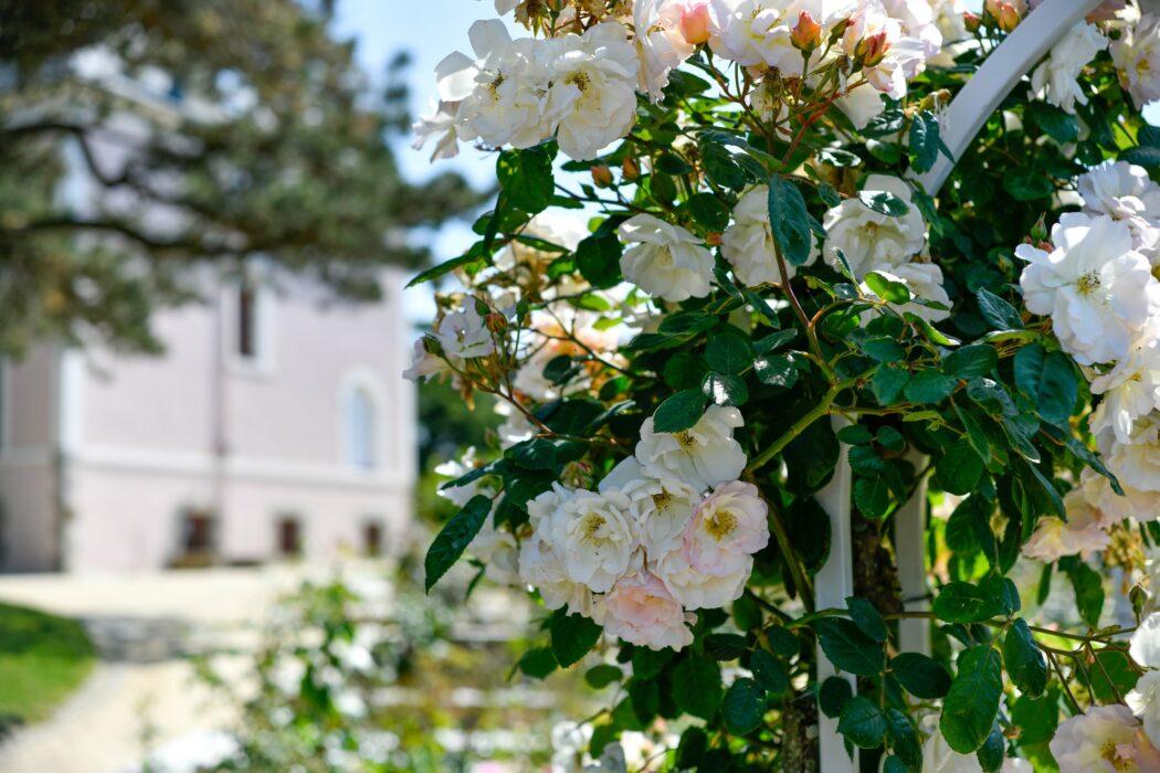 Jardín del museo Christian Dior. Fotografía: Benoit Croisy.